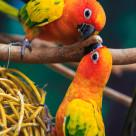 """""""Playful parakeet"""" stock image"""