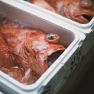 """Tsukiji Fish Market"" stock image"