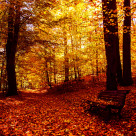 """Autumnal Fire"" stock image"