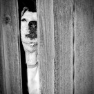 """Peek-a-Boo Pup"" stock image"
