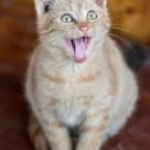 """Orange Kitty"" stock image"