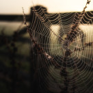 """What A Wonderful Web You Weave"" stock image"
