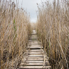 """The hidden path"" stock image"