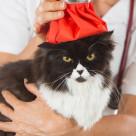"""""""Cat flu"""" stock image"""
