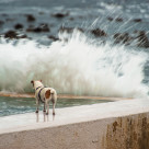 """A Jack Russel terrier waits for his master to surface"" stock image"