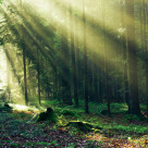 """Forest Sunbeams"" stock image"
