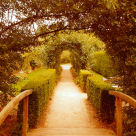 """A Walk Up The Garden Path"" stock image"