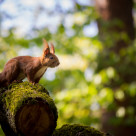 """""""Squirrel ready to jump"""" stock image"""