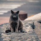 """""""Watchful Cat"""" stock image"""