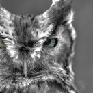 """Owl in Monochrome"" stock image"