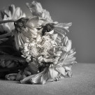 """Faded Flower"" stock image"