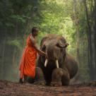 """""""Monk with elephants ."""" stock image"""