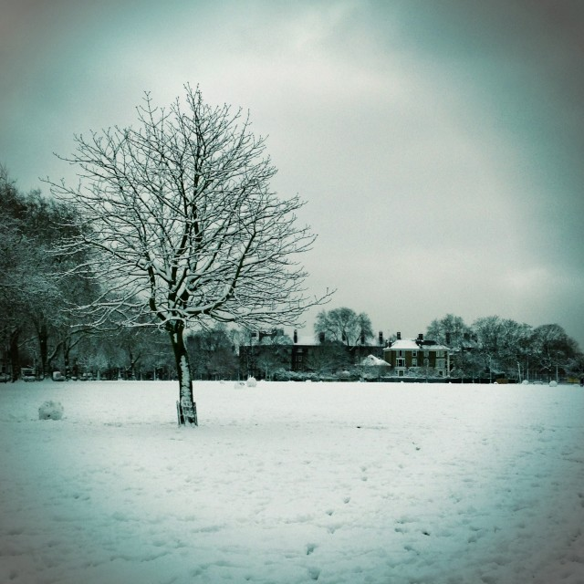 """A snowy tree, Hackney, East London"" stock image"