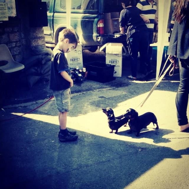 """Little boy, little dog"" stock image"