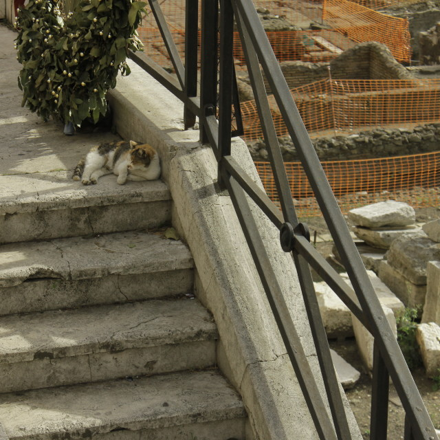 """Gatto di Roma"" stock image"