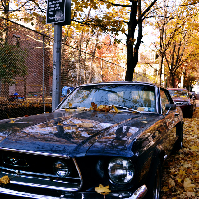 """Mustang covered in leaves - Brooklyn, NY."" stock image"