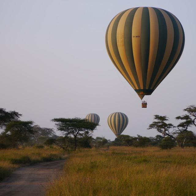 """""""Serengeti Balloon Safari"""" stock image"""