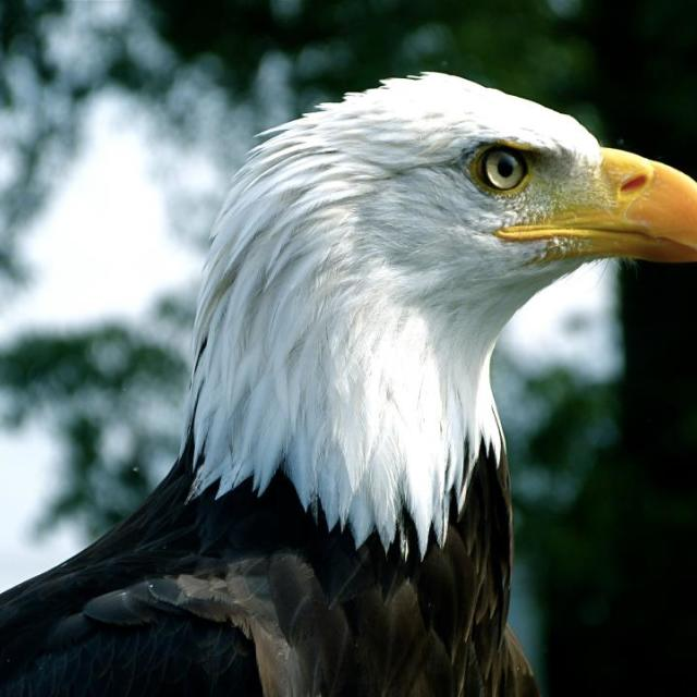 """Eagle eye"" stock image"