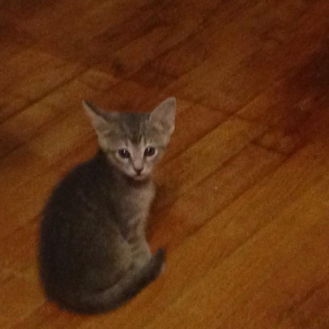 """""""Cute kitten"""" stock image"""