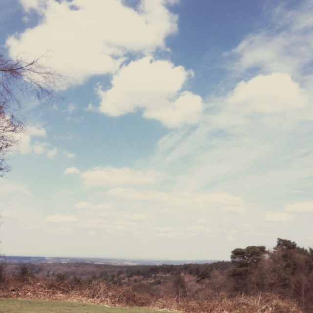 """The top of Leith Hill"" stock image"