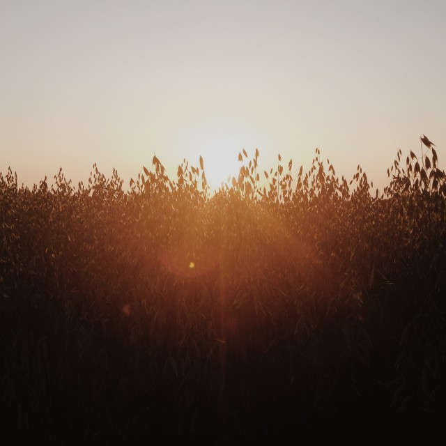 """Fields at sunset"" stock image"