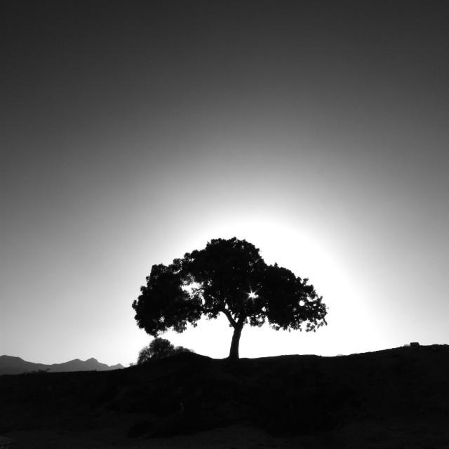 """Oman wadi"" stock image"