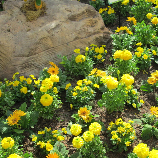"""""""Yellow flowers in bloom"""" stock image"""