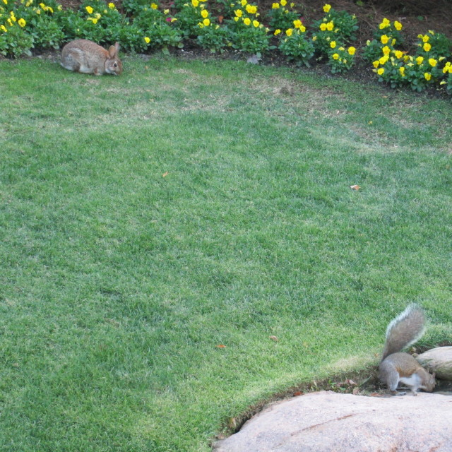 """Bunny & Squirrel on the lawn"" stock image"