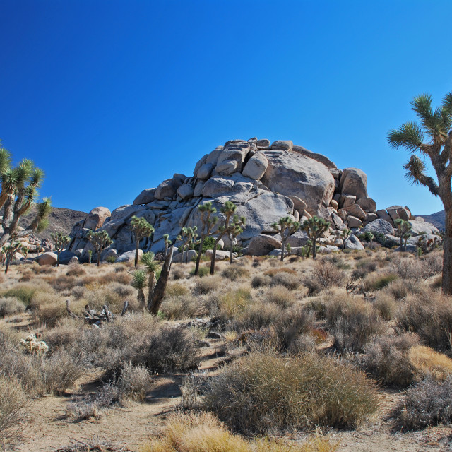 """Cap Rock, Joshua Tree National Park"" stock image"