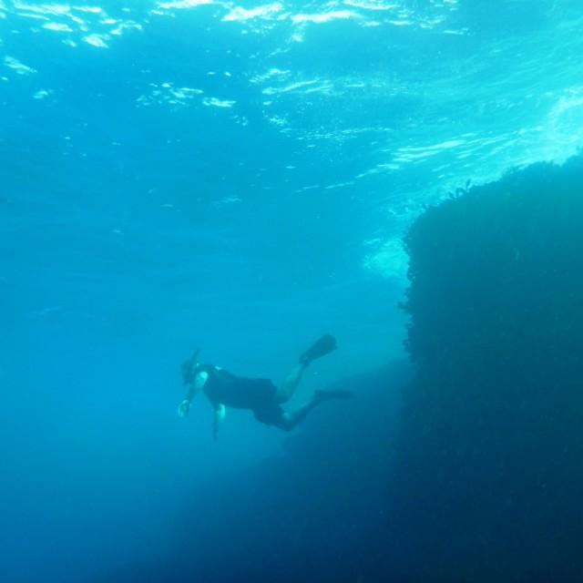 """Freediving at North Bondi"" stock image"