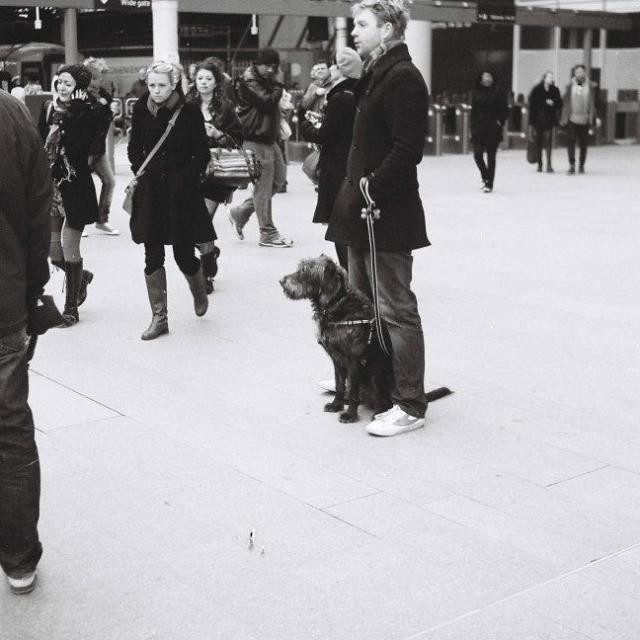 """Dog and Owner at Victoria"" stock image"