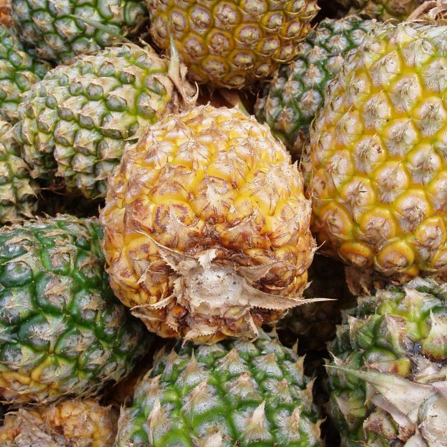 """Pineapples, Mo'orea, French Polynesia"" stock image"