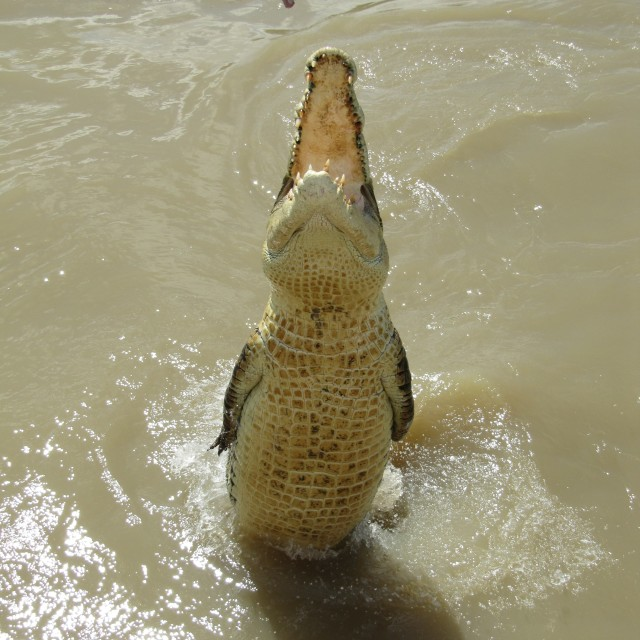 """Jumping crocodile"" stock image"