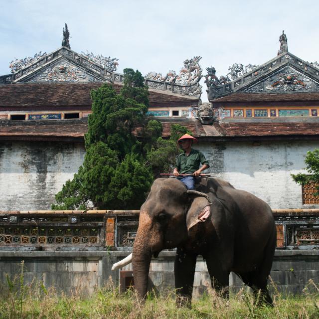 """""""Elephant Vietnam"""" stock image"""