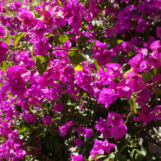 """Flowers on Lombard Street"" stock image"