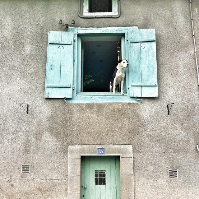 """Watch dog"" stock image"