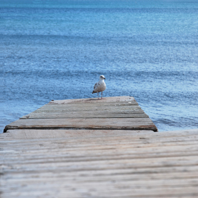 """Seagull on jetty"" stock image"
