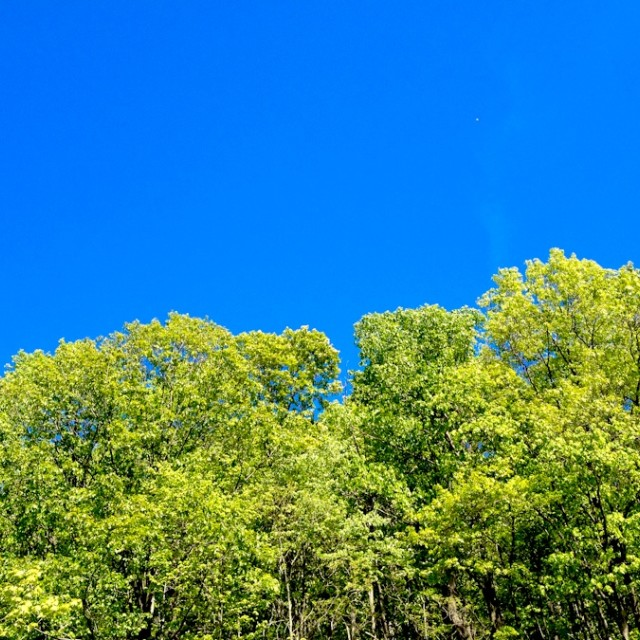 """Blue Sky Green Trees"" stock image"