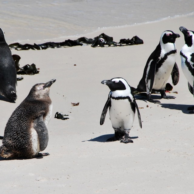 """""""Boulders Beach, South Africa"""" stock image"""