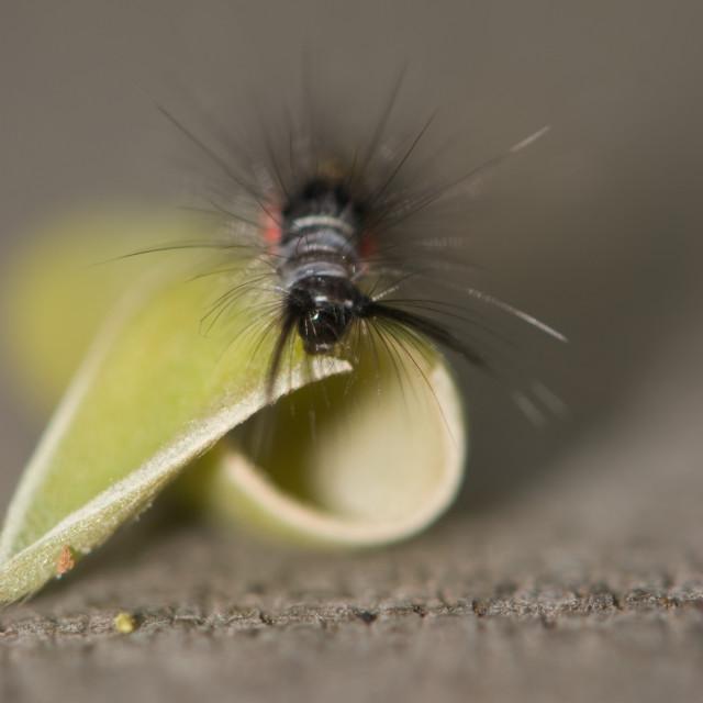 """""""Hungry Caterpillar"""" stock image"""