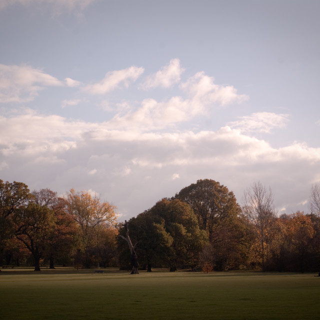 """Tooting Common"" stock image"