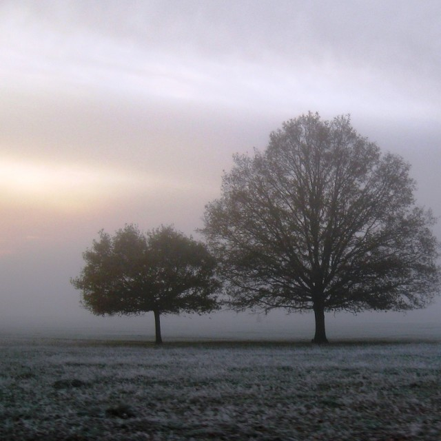 """""""Richmond park trees, early morning"""" stock image"""