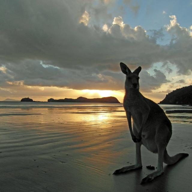 """Beach roo"" stock image"