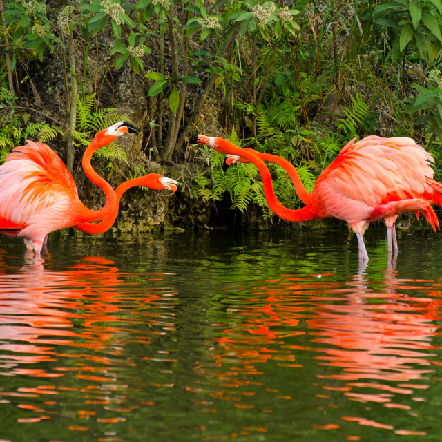 """Angry birds - two flamingo pairs"" stock image"