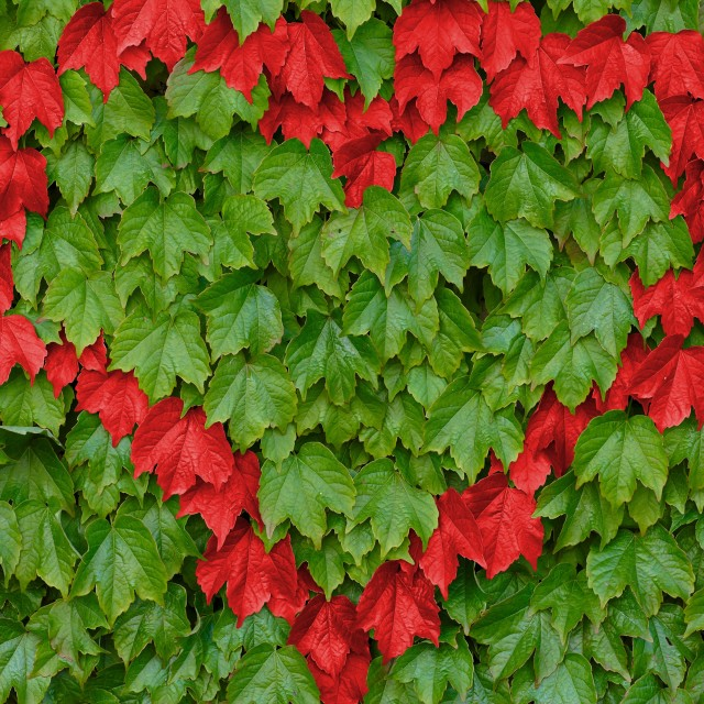 """Red heart on green leaves"" stock image"