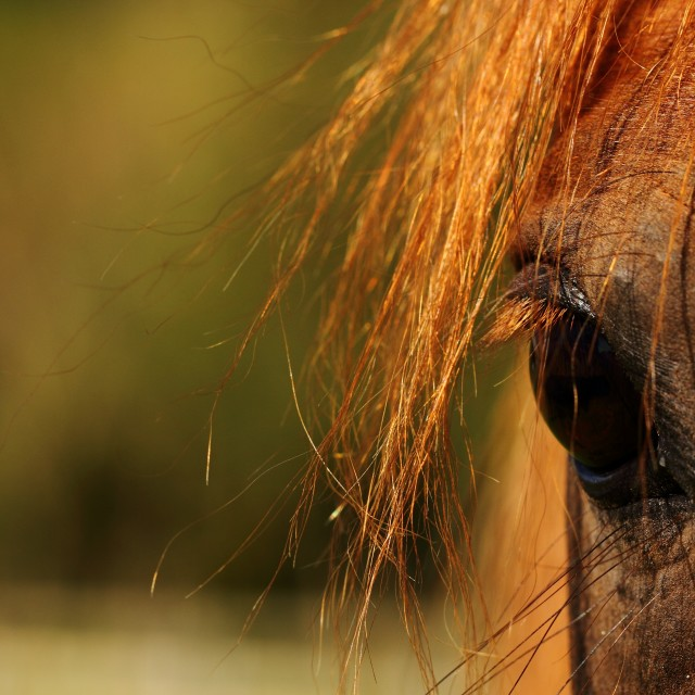 """""""Horses eye"""" stock image"""