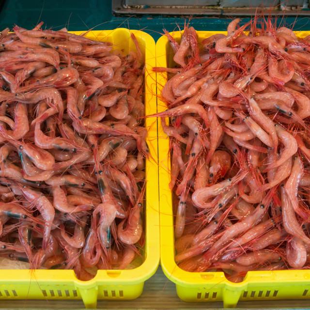 """Shrimps"" stock image"