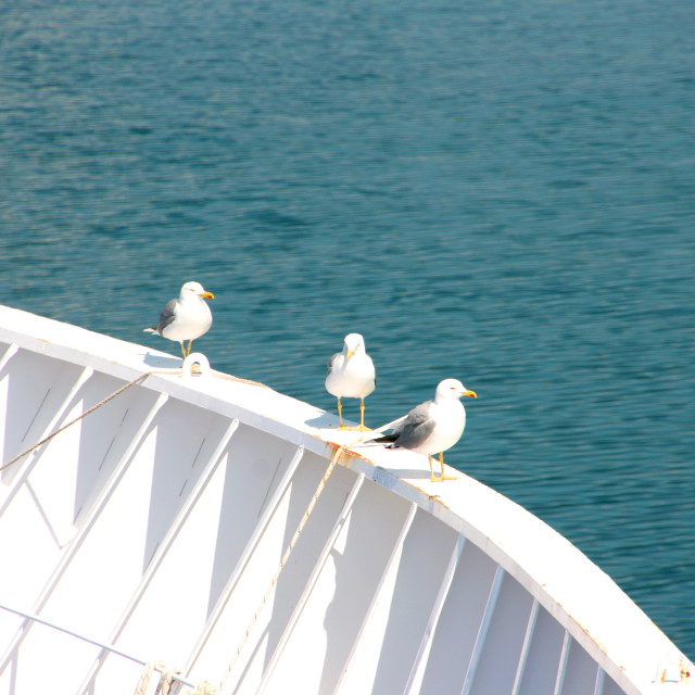 """Three seagulls against the blue Aegean"" stock image"