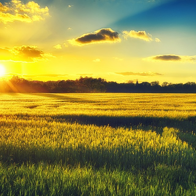 """Sunset over a corn field"" stock image"