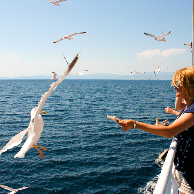 """Feeding the seagulls on ferry to Thassos, Greece"" stock image"